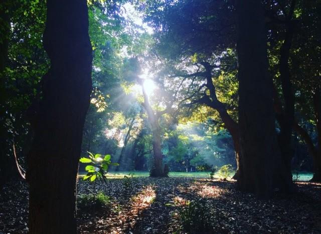1日目のフィールドワークで足を運んだ明治神宮でとても印象的だった木