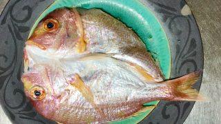 美味しい魚のある暮らし