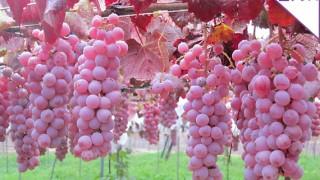 たべる日本ワイン学