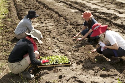 仙台・遠藤農園お米作りサポートプログラム 参加者募集