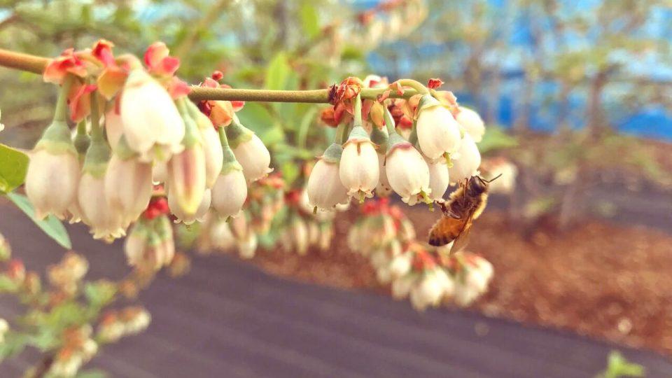都市養蜂入門